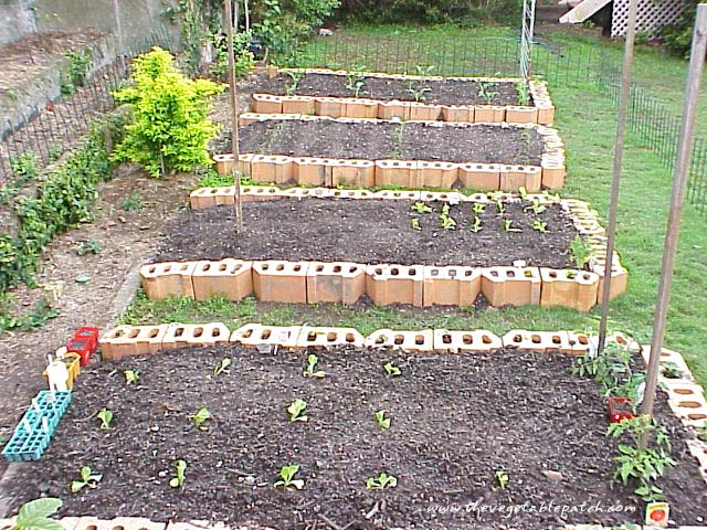 Vegetable gardening the vegetable patch vegetable for Vegetable patch
